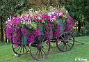 Cart Before the Horse by Canadia-Nikon in Member Albums