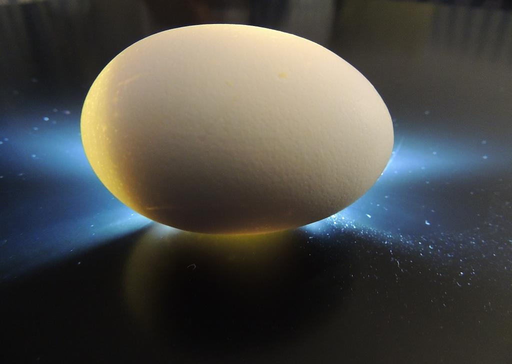 Egg by Alan in Member Albums