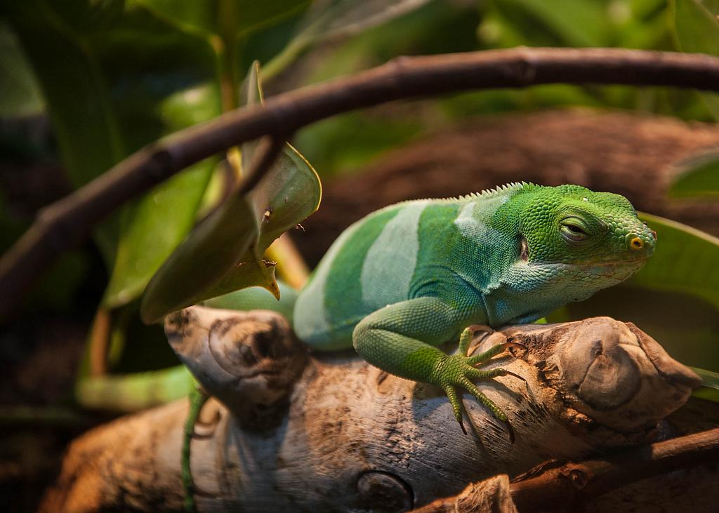 Detroit Zoo Reptile House by carguy in Member Albums