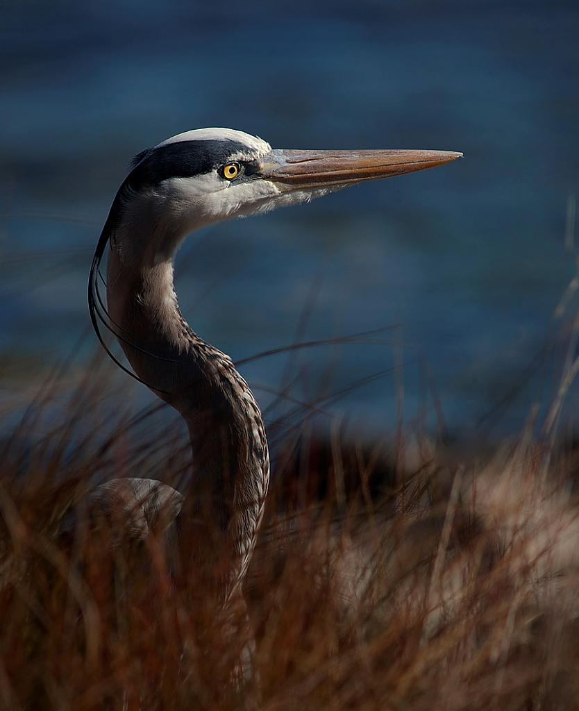 Brown Heron by STM in Member Albums
