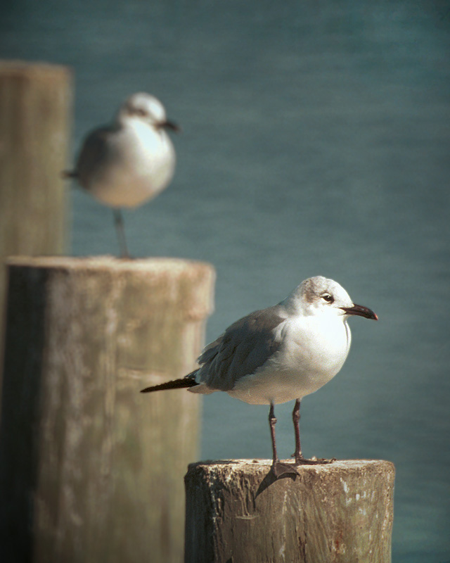 gulls by STM in Member Albums