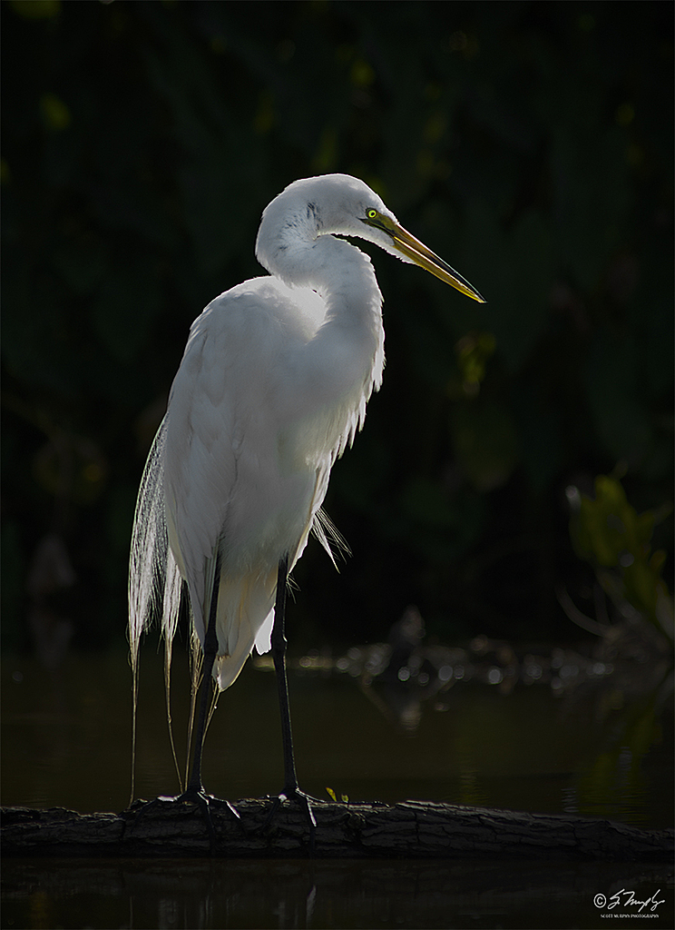Great Heron by STM in Member Albums