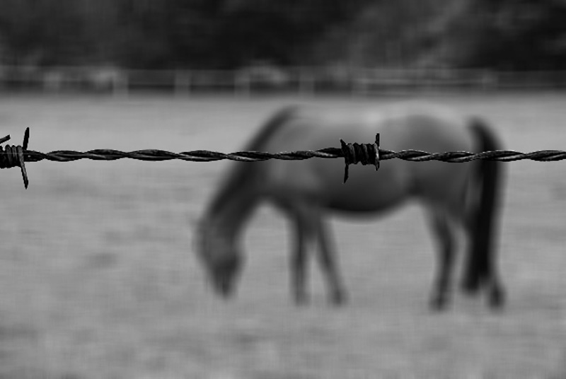 Horse and Barbed Wire by STM in Member Albums