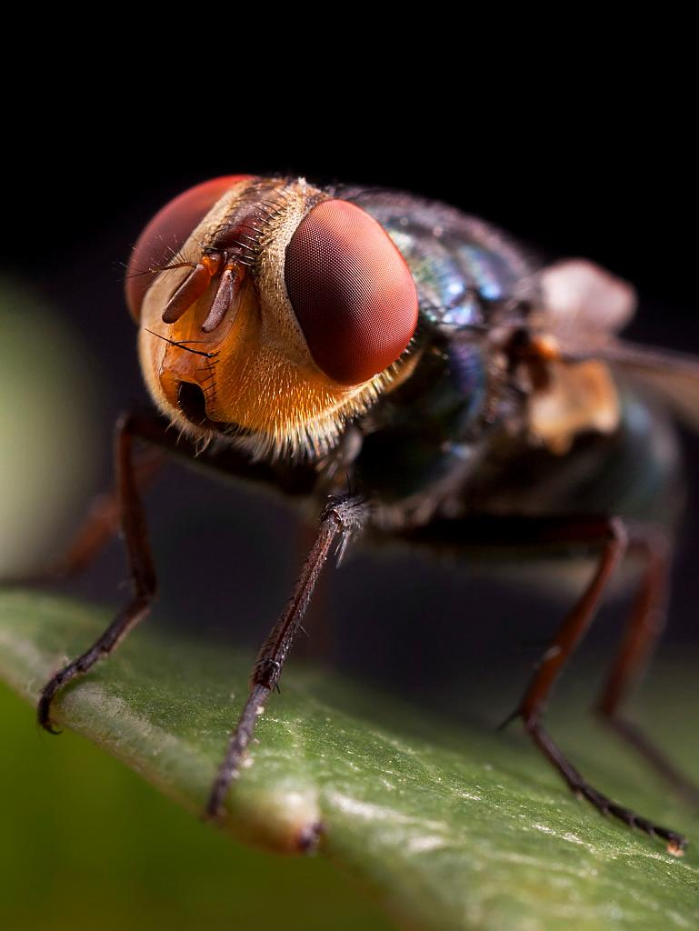 Housefly by STM in Member Albums