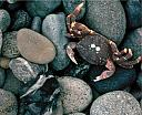 Crab and Ocean Rocks by STM in Member Albums