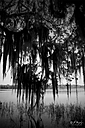 Spanish Moss by STM in Member Albums