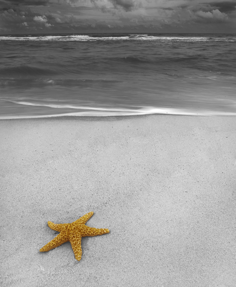 Starfish Spot Color by STM in Member Albums