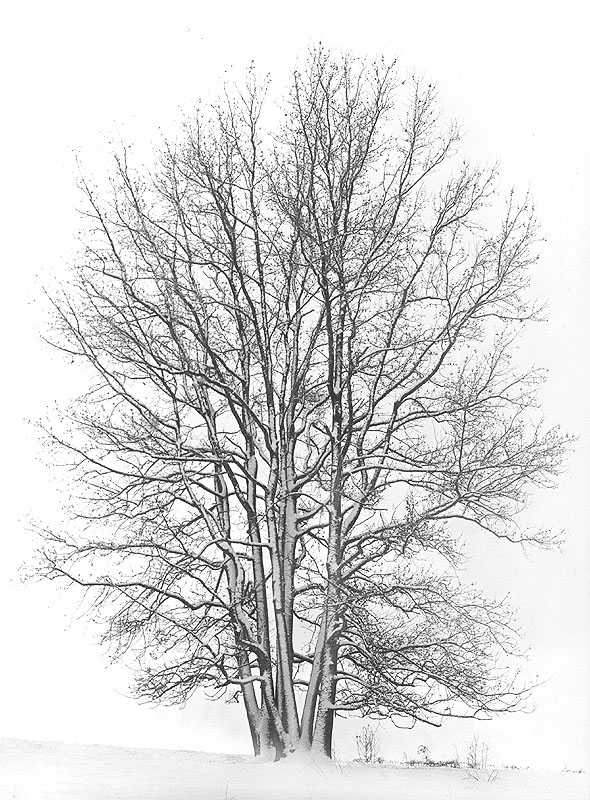 Winter tree by STM in Member Albums
