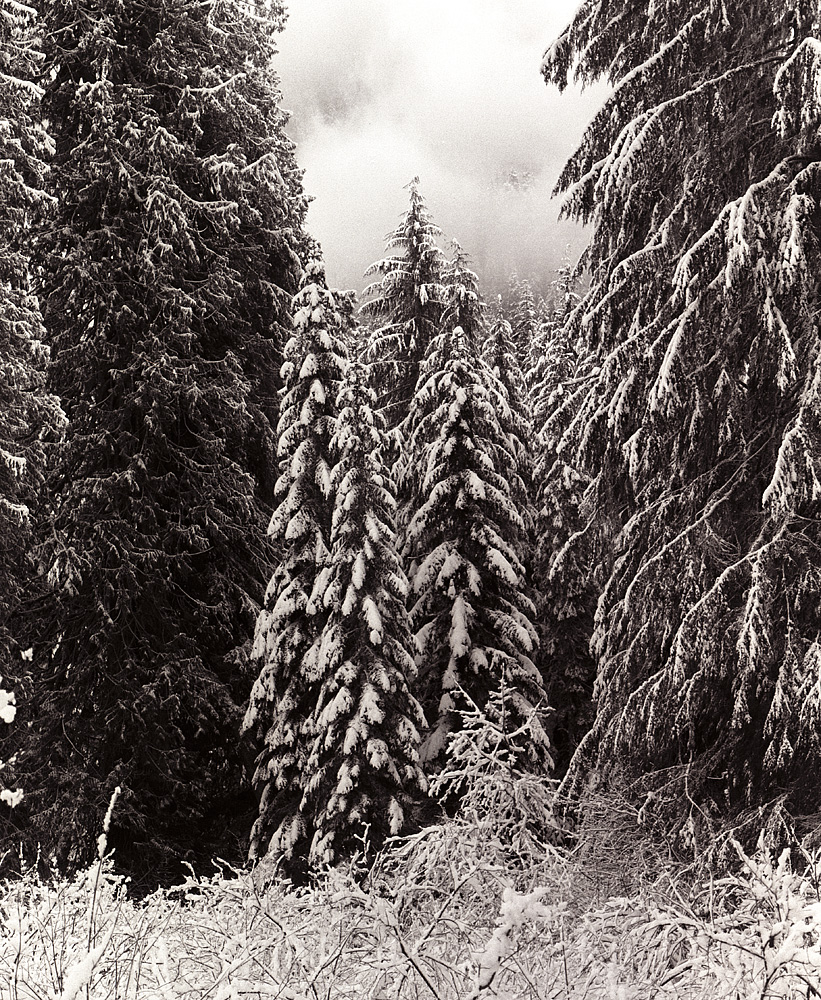 Winter Trees by STM in Member Albums