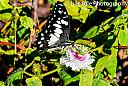 The Butterfly by marcoa6 in Around Mount Isa
