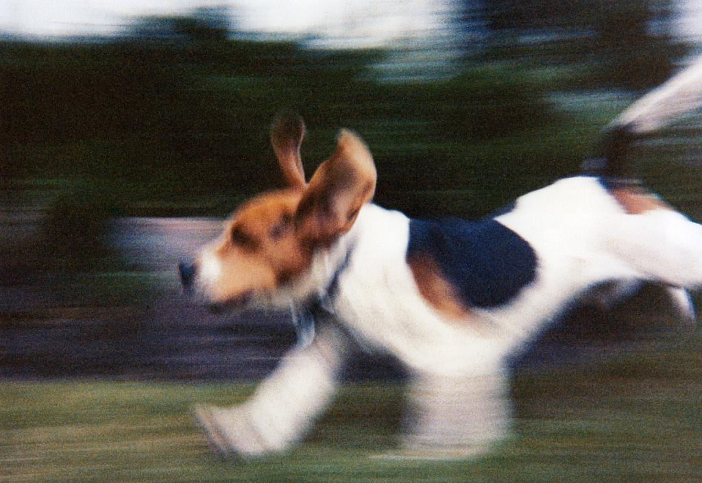 Sam running by crycocyon in Member Albums