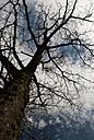 Tree pointing to the sky by Allan LJ in Member Albums