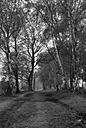Path in local nature reserve by Allan LJ in Member Albums