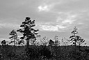 Skipwith Common by Allan LJ in Member Albums
