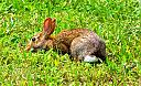 rabbit   by casablues in Member Albums