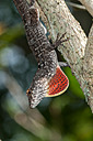 Agitated Anole by Whiskeyman in Member Albums