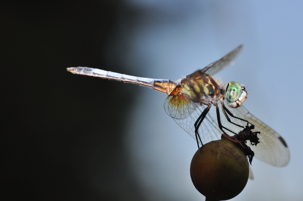 Dragonfly-1 by Whiskeyman in Member Albums