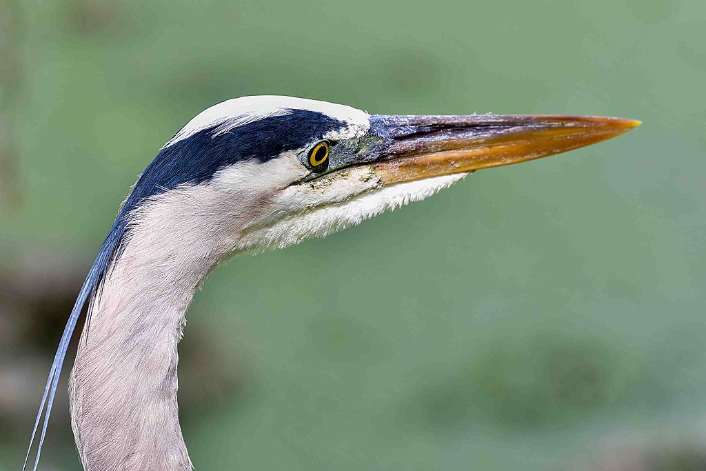 GBH up close by Whiskeyman in Member Albums