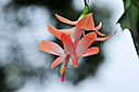 Christmas Cactus - 2016 -2 by Whiskeyman in Member Albums