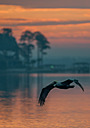 Sunrise Pelican - 2 by Whiskeyman in Member Albums