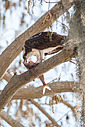 Circle B Bar - Osprey with Catch 2 by Whiskeyman in Member Albums