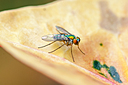 Fly on Leaf by Whiskeyman in Member Albums