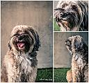 dogs by wud in Member Albums