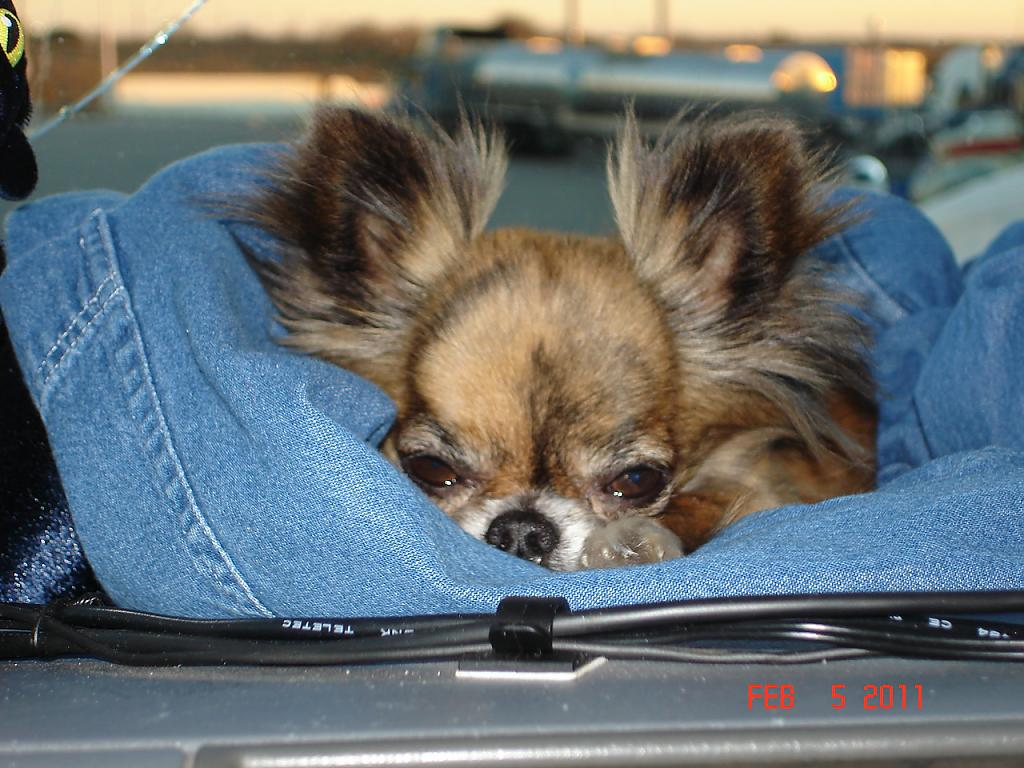 Snuggles on dash of my truck. Taken with my Coolpix 3100 by Dee Hyder in Member Albums