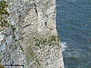 bempton 002 by mikew in Mixed bag