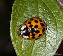dsc 0025 580928 by mikew in Creepy crawlies