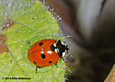 dsc 0267 by mikew in Creepy crawlies