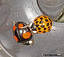 dsc 0280 by mikew in Creepy crawlies