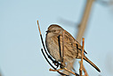 Dunnock by mikew in mikew 2015
