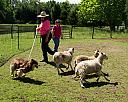 Denali meets the Sheep by Lakeside Annie in Member Albums