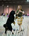 Show Dogs: Play? by Lakeside Annie in Member Albums
