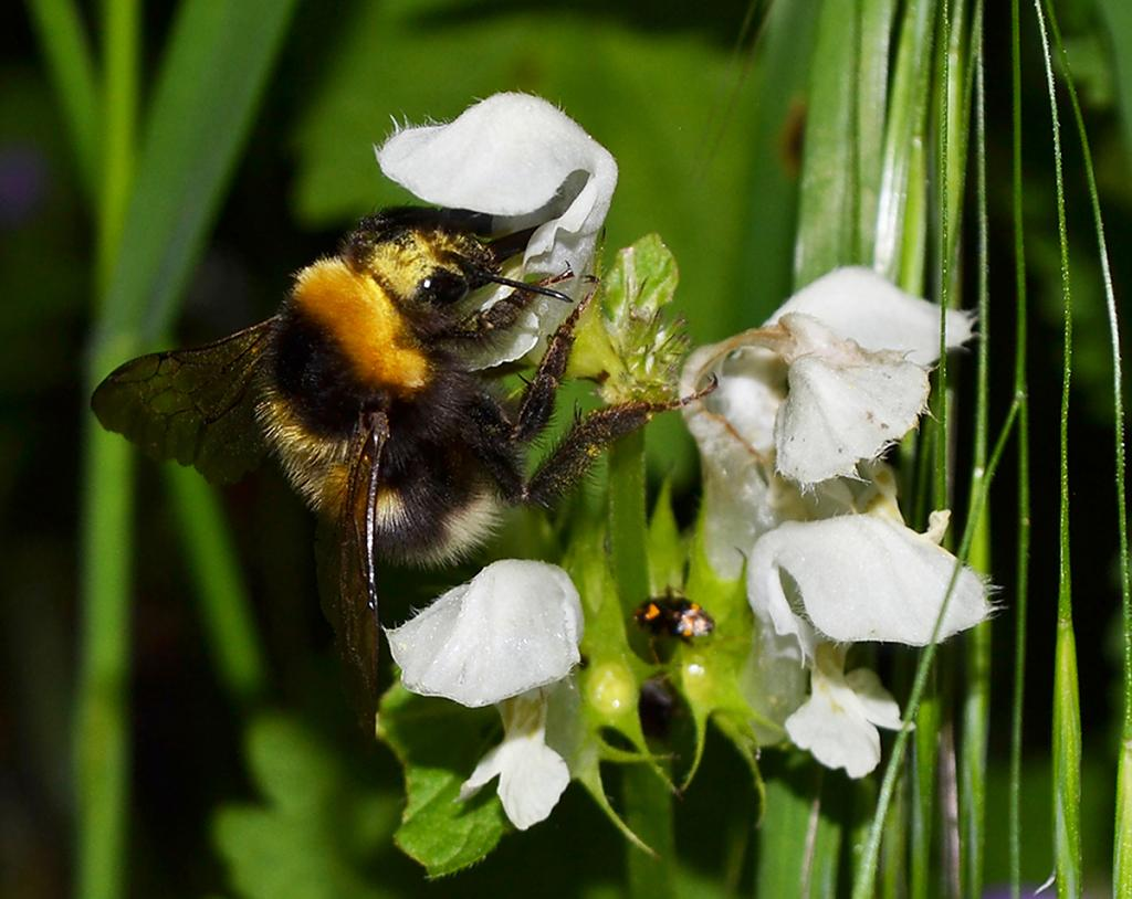 Bee's Delight by WeeHector in Member Albums