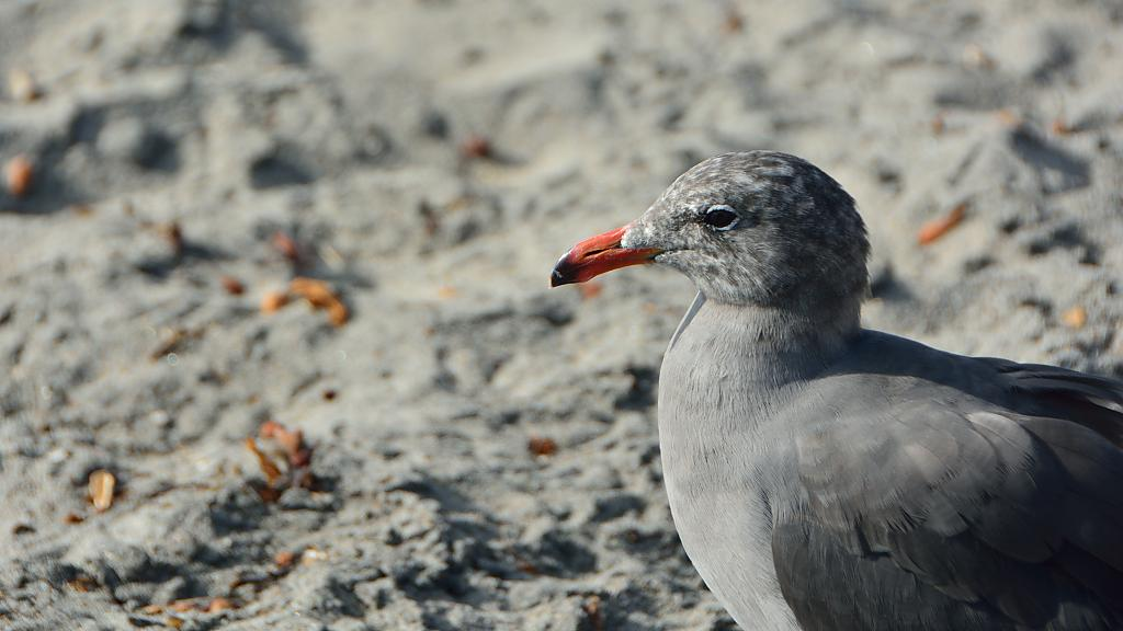 Bird Buddy by Nathan Lanni in Member Albums