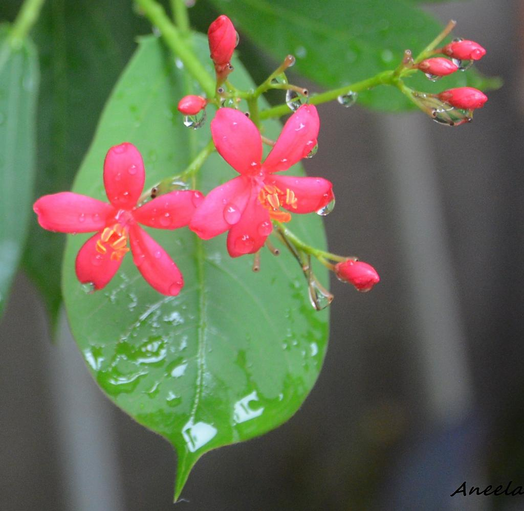 After the rain by Aneela in Member Albums
