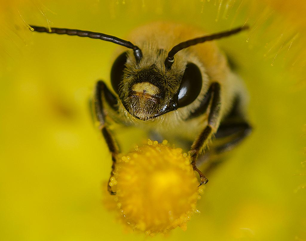 Have you hugged a Bee today by caroleann1947 in Member Albums