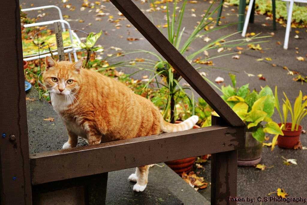 Cat on Stairwell by Nero in Member Albums