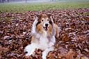 Dog Playing in the Leaves  by Nero in Member Albums