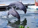 Dolphin Duo by Twinpop1 in Member Albums