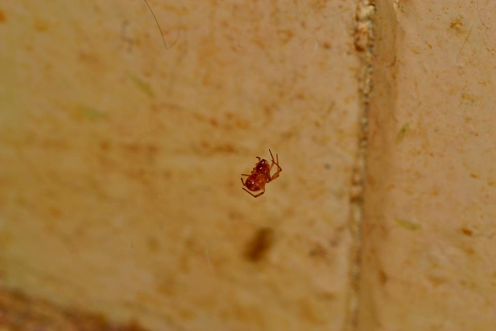 tiny spider take 2 by Bill16 in Member Albums