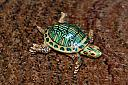 Turtle by Bill16 in Member Albums