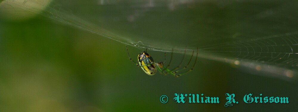 spider yellow by Bill16 in Member Albums