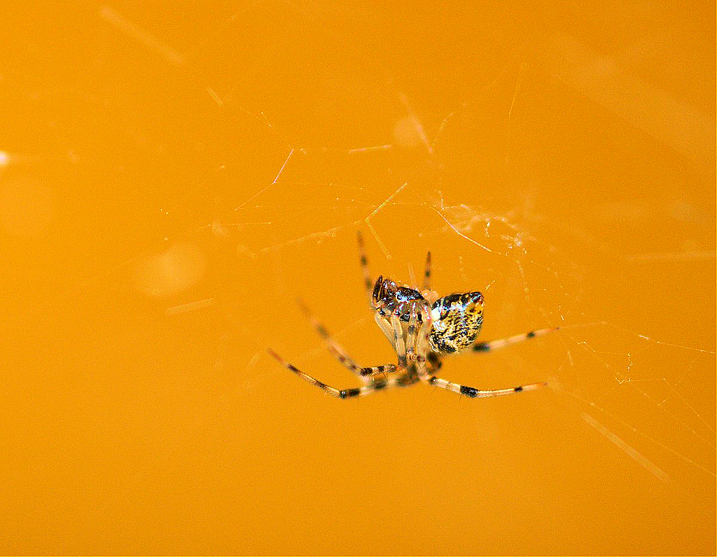 teeny spider by Bill16 in Member Albums