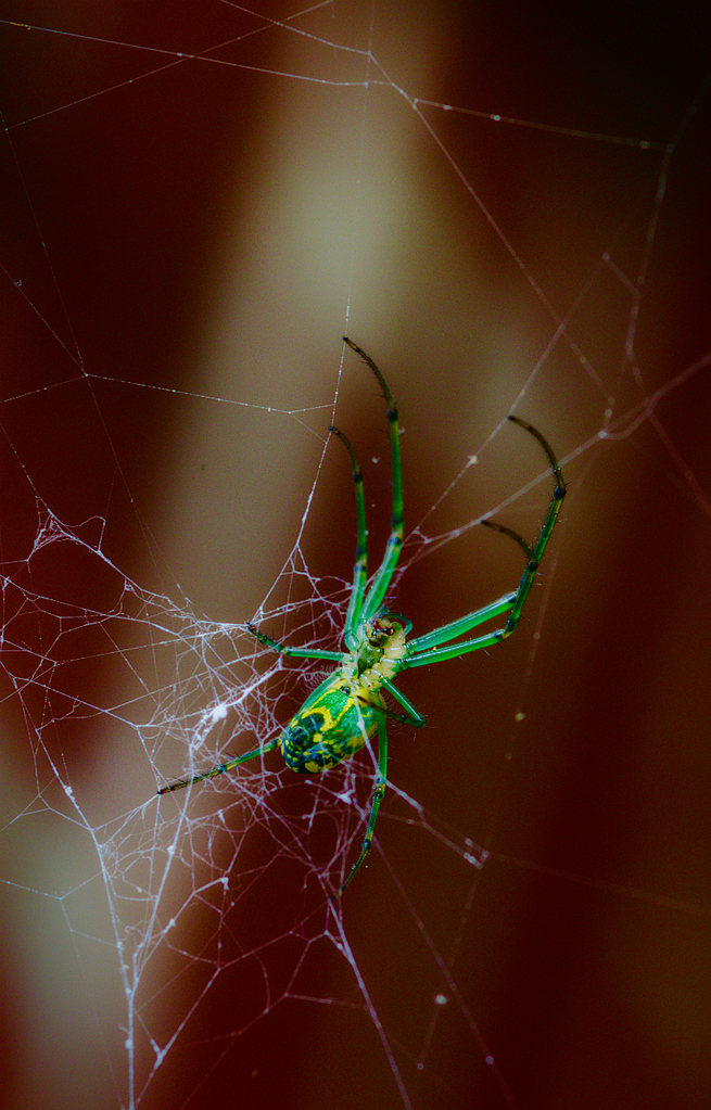 spider twisted by Bill16 in Member Albums