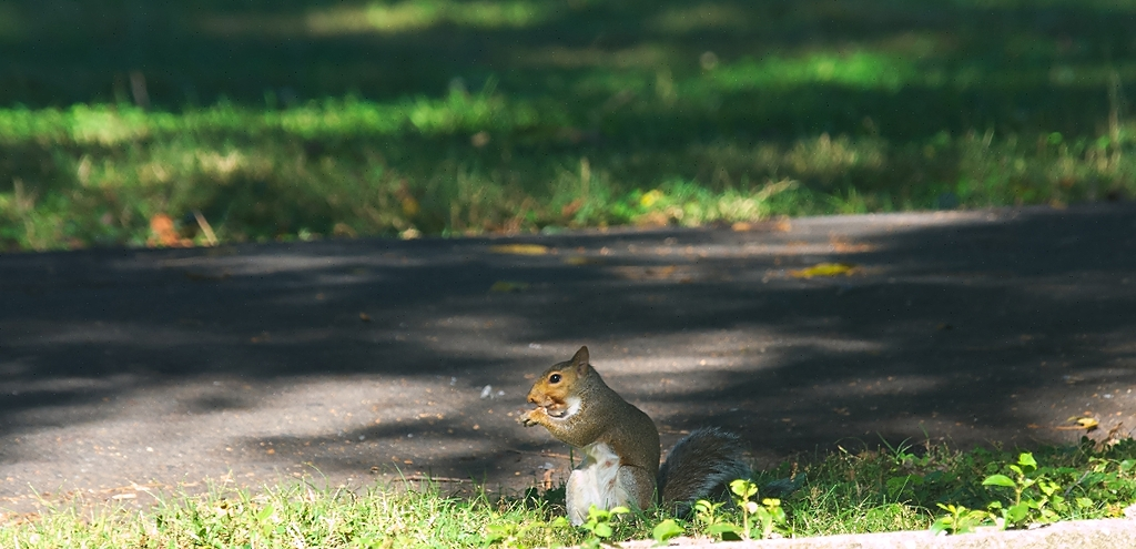 squirrel by Bill16 in Member Albums