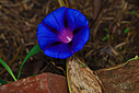 photoshope Blue by Bill16 in Member Albums