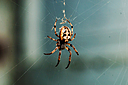 photoshop brown spider by Bill16 in Member Albums